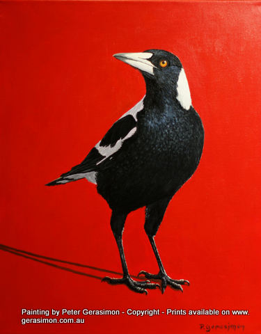 Magpie Painting by Peter Gerasimon
