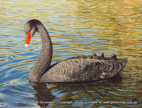 Black Swan Painting by Peter Gerasimon